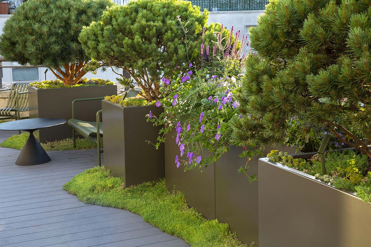 Mayfair Roof Terrace features strong evergreen shapes