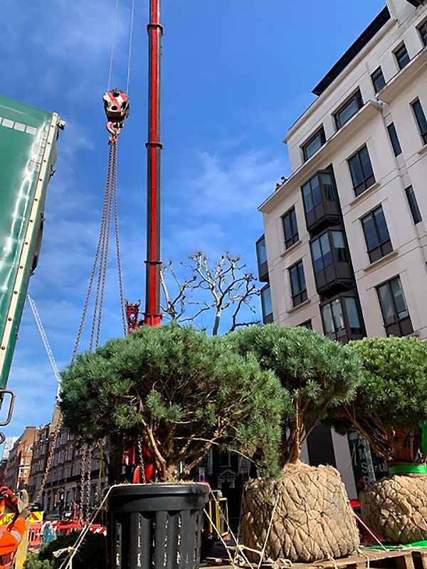 Craning plants into place on 5th floor terrace for a client