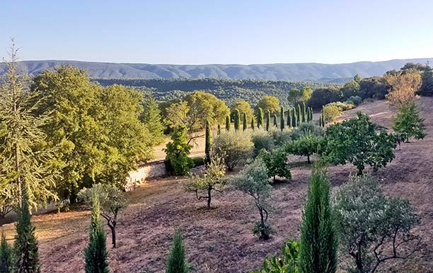 Provence landscape by Maïtanne Hunt