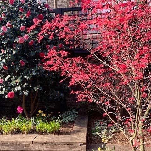 Oxford Gardens by Maïtanne Hunt